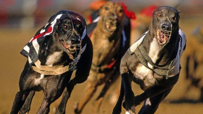 British gambling corporations support greyhounds