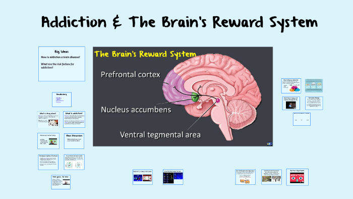 Reward system in the brain